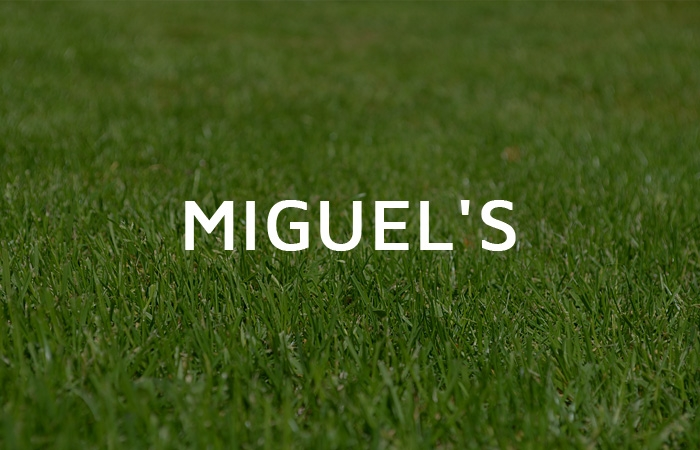 Miguel's Lawn Tree & Landscaping